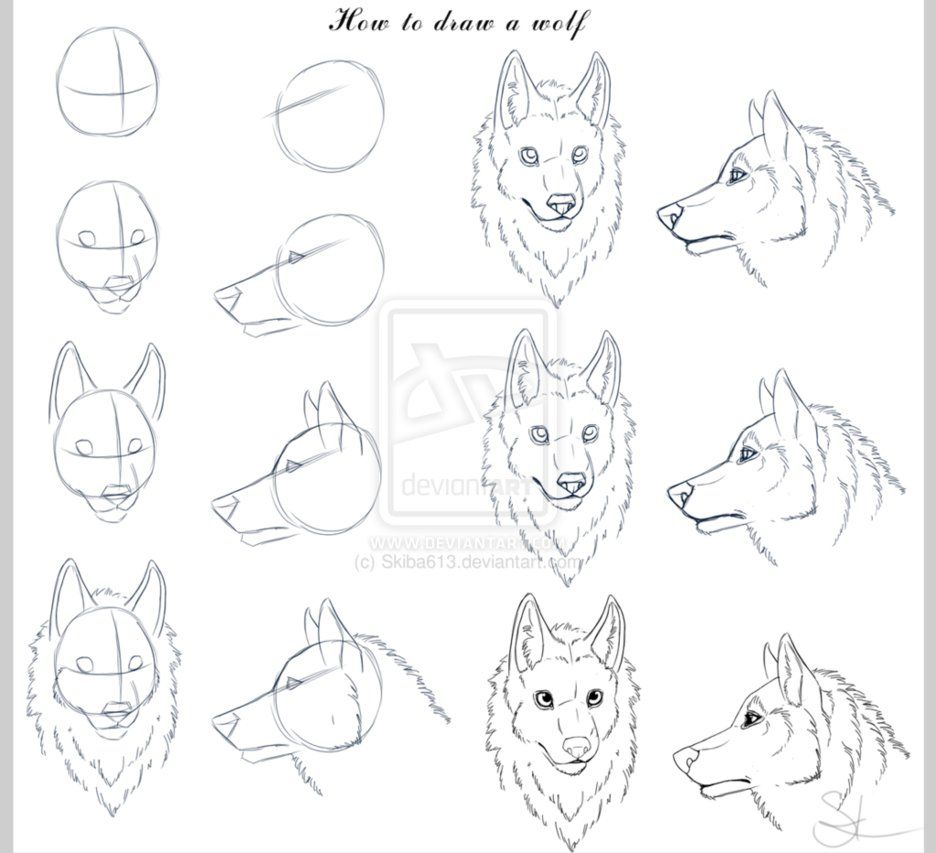step by step how to draw a wolf head