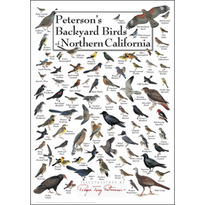 ... Along With James Audubon, Are Americas Most Famous Bird Naturalists And  Illustrators This Stunning Poster Includes 81 Of The Most Common Backyard.