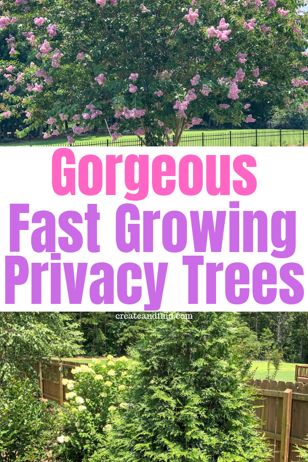 Fast Growing Privacy Trees Privacy Landscaping Privacy Trees