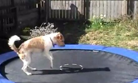 Animals Jumping On Trampolines Video