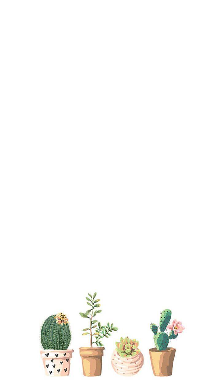 Tumblr Backgrounds Succulent Boho Iphone