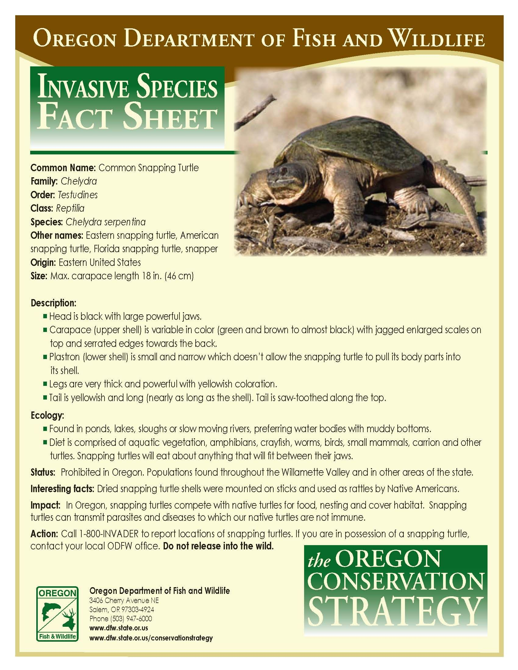 Common snapping turtle by the oregon department of fish for Oregon fish and wildlife