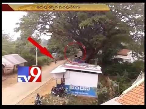Elephant attack caught on camera