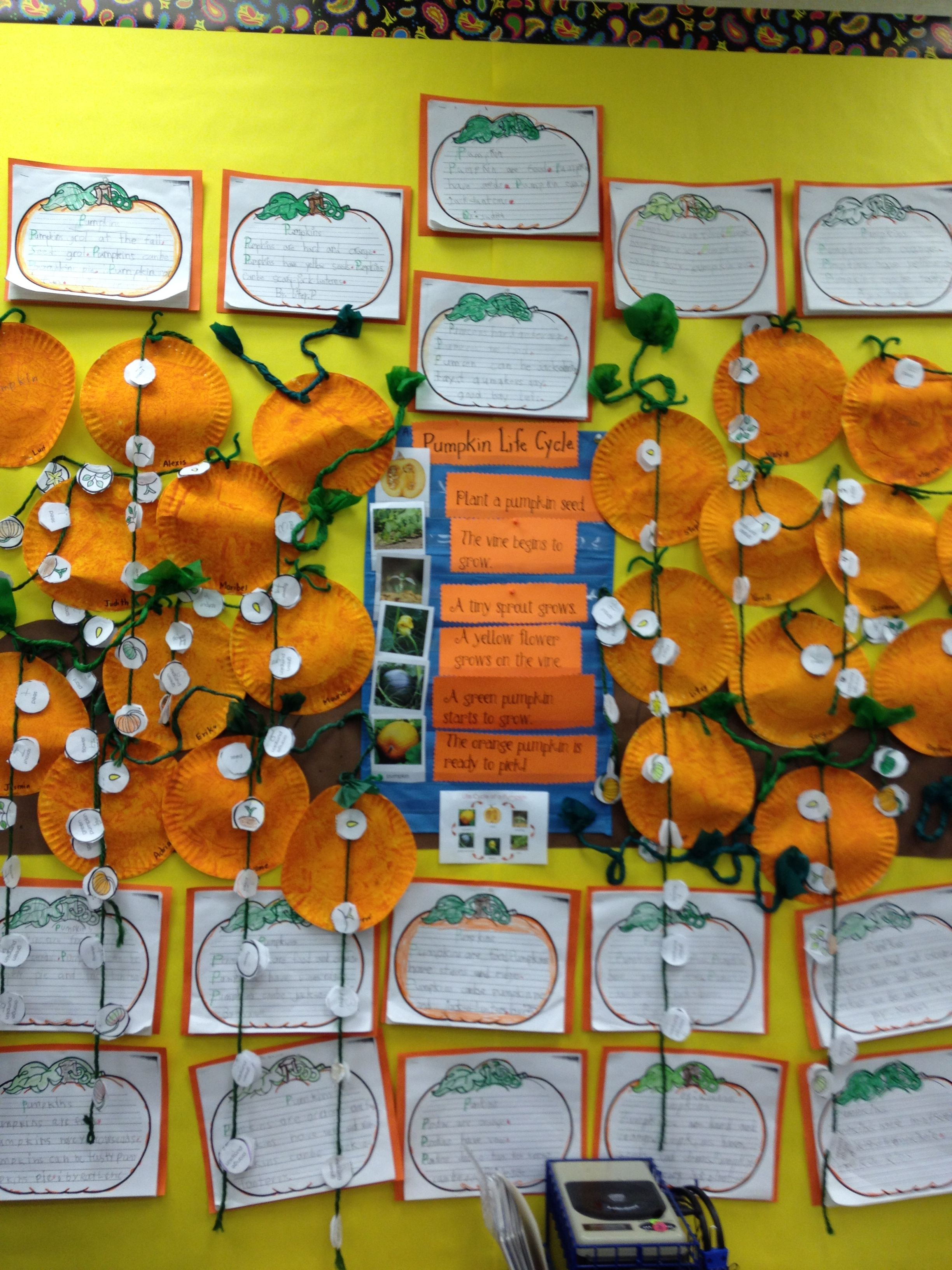Pumpkin Life Cycle Bulletin Board Display