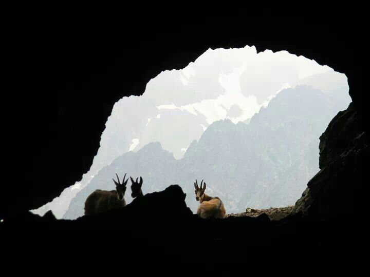 Kamzicia jaskyna - Belianska jaskyna - Slovakia