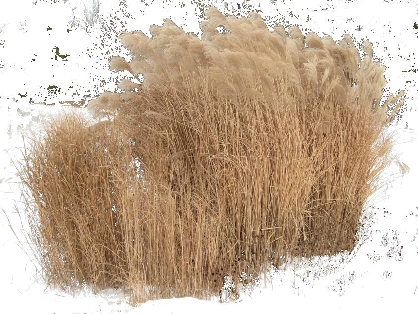 Pingl par alla lebedeva sur tree pinterest photoshop for Logiciel espace vert