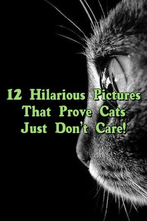 Kylie Black Tells About 12 Hilarious Pictures That Prove Cats Just Don't Care!   #catbreeders  #kitty  #world  #love  #lovecats  #Choose  #Cats  #Guide