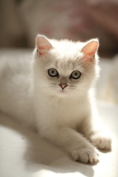 kitty! ♥