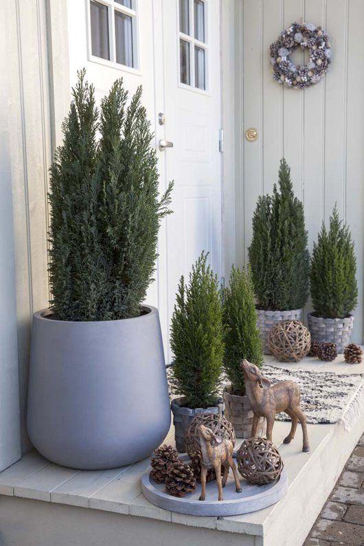 Pynt inngangspartiet med vintergr nne busker 2018 for Jardineria al aire libre casa pendiente