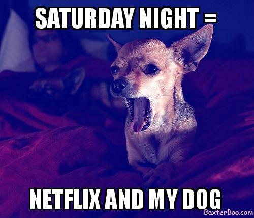 a22166904d1d81c2f3f71131ec7e16f9 spending saturday night with my dog and netflix cute pet memes