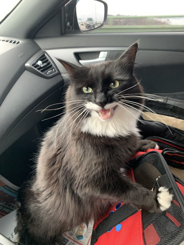 Roadtrip Teefies Cat And Dog Memes Kittens Cutest Dog Cat