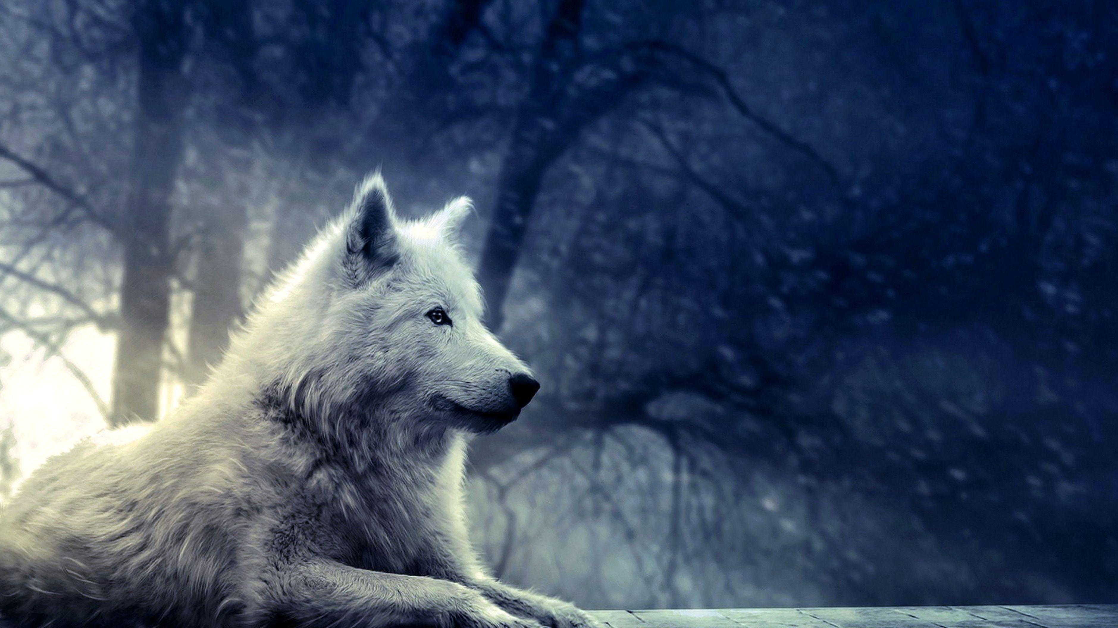 Best Wolf Wallpapers 4k Best Wolf Wallpapers 4k Wolf Poster Wolf Wallpaper Fantasy Wolf