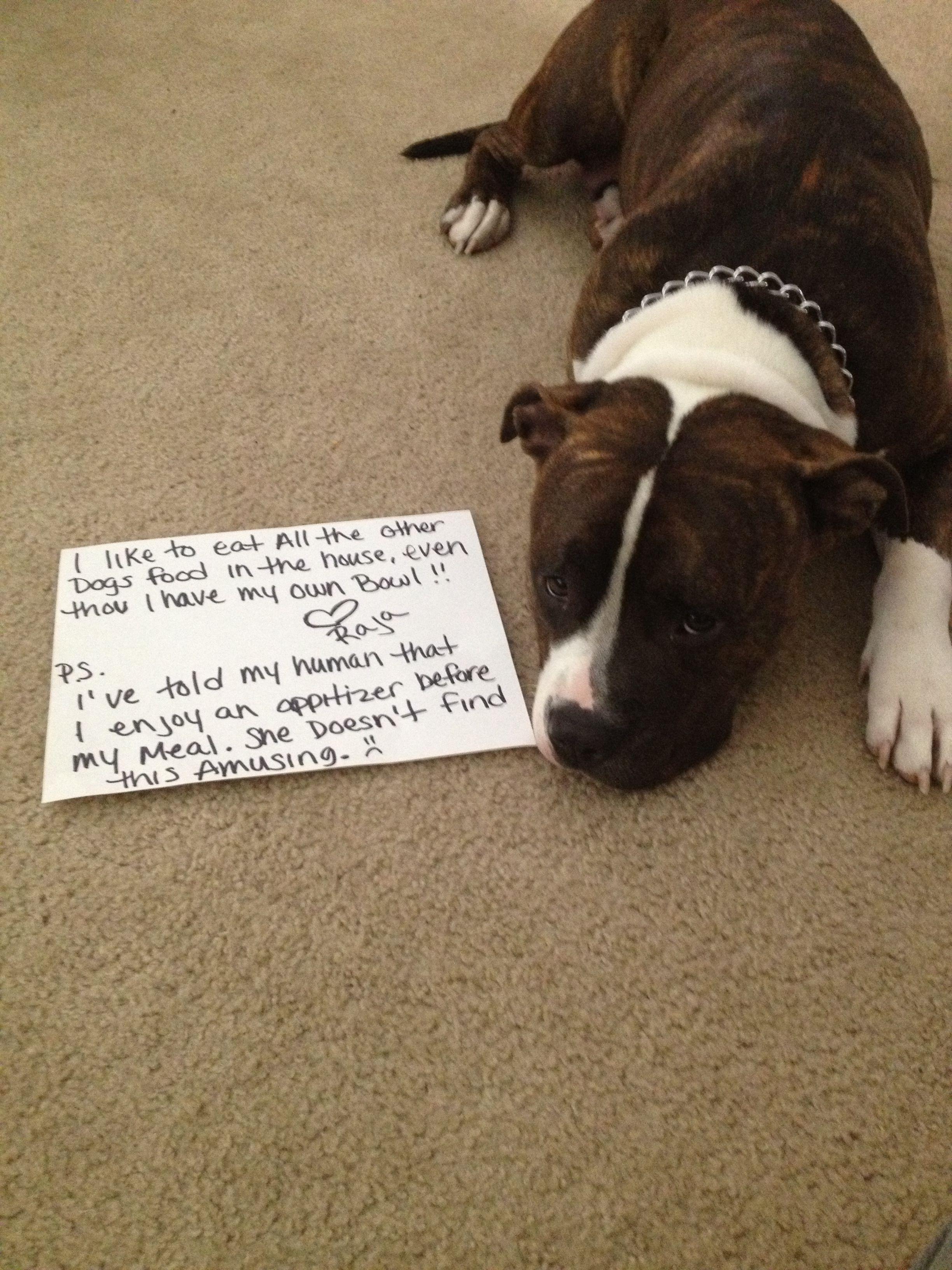 Dog Shaming Pit Bulls Pitbull Pit Dogs Dog Shaming Bad