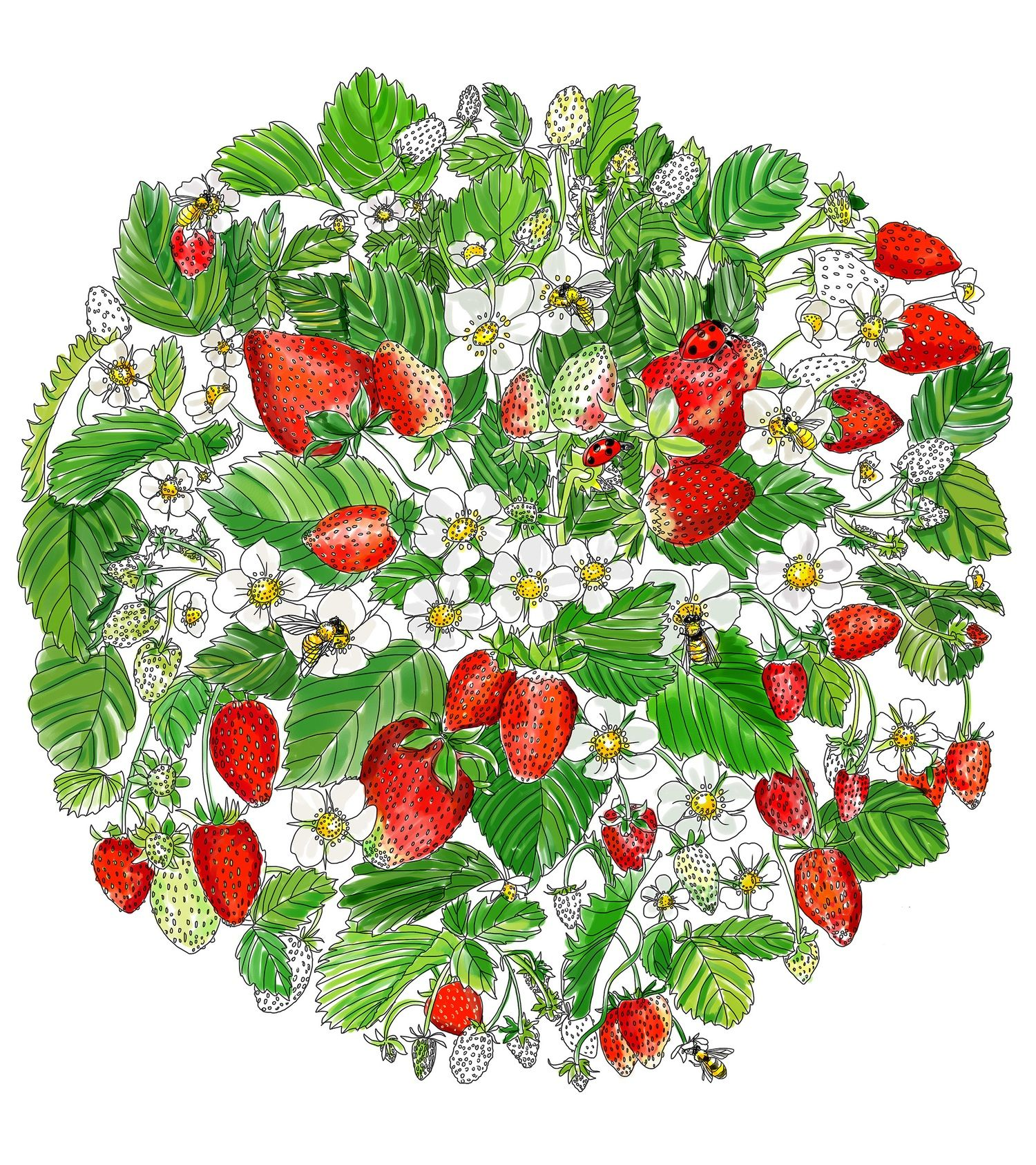 A Printable Adult Coloring Page for Strawberry Lovers   Adult ...
