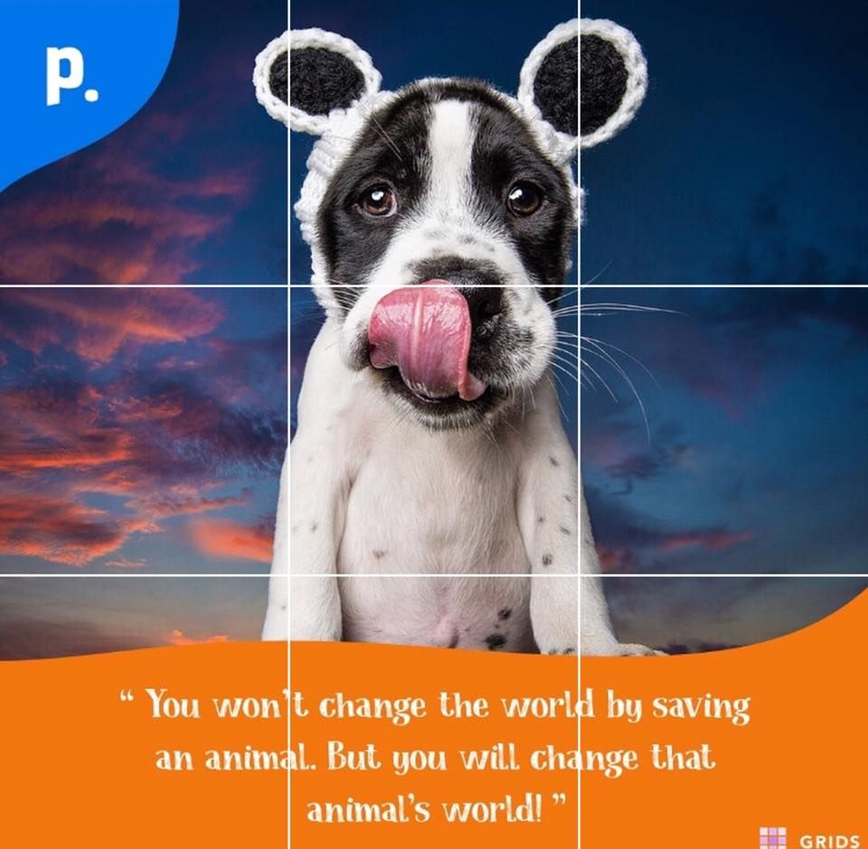 How Can Pet Day Care Services From Our Side Help You Pet Daycare Pet Day Pets