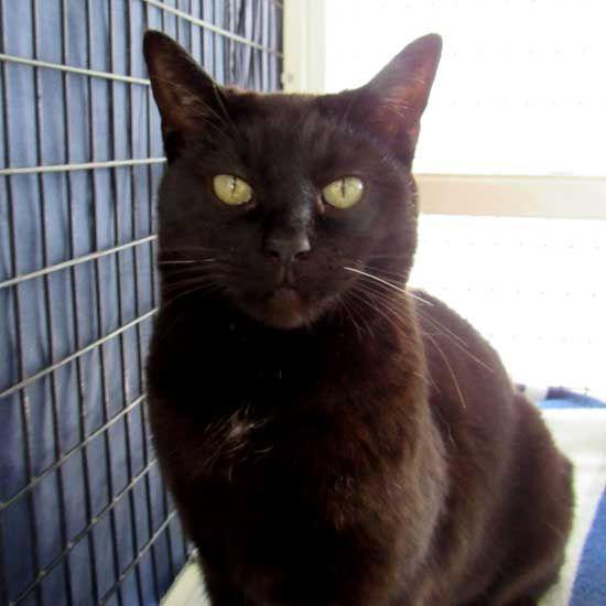 Cat Kittens For Adoption In San Diego Kitten Adoption Cat Adoption Cats