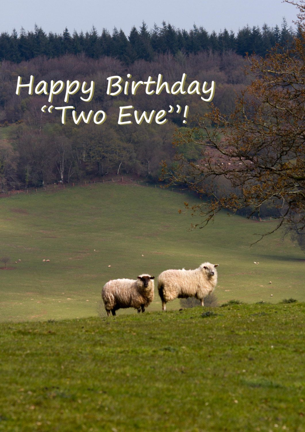 Happy birthday greeting card funny saying sheep ewe card happy birthday two ewe greeting card sheep funny saying birthday blank photo card by rm kristyandbryce Image collections