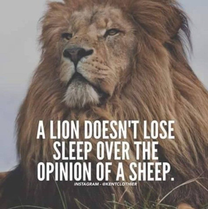 A Lion Doesn T Lose Sleep Over The Opinion Of A Sheep