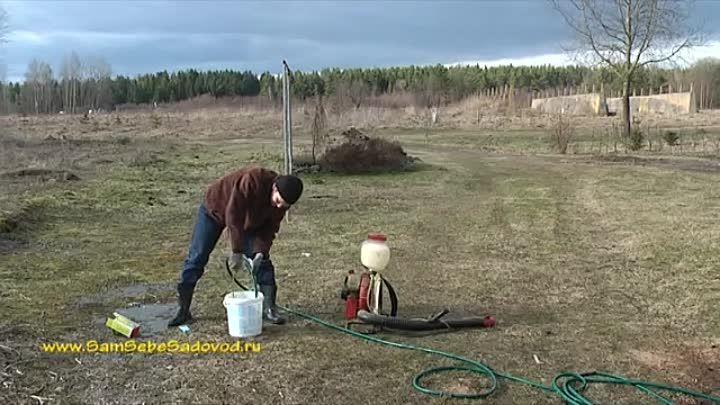 опрыскивание рассады мочевиной