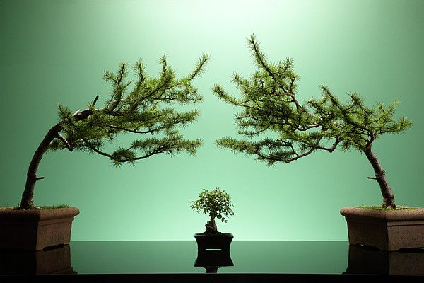 Here, flanked by two slender pines, the Small Bonsai is highlighted