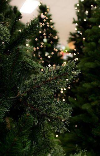 winter christmas lights snow tree december Navidad Merry Christmas winter christmas lights snow tree december Navidad Merry Christmas Neryllfedalenlll neryllfedalenlll fa...