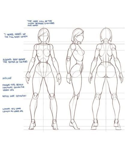 Character Design Collection Female Anatomy Anatomy Reference
