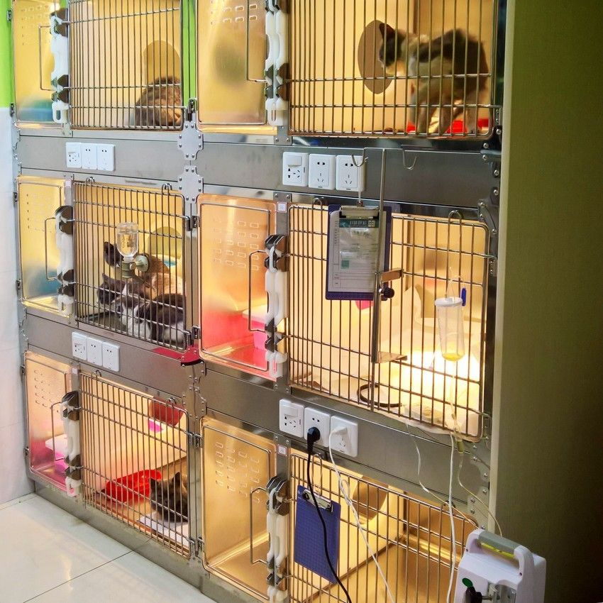 Stainless Steel Cat Cages From China Animal Hospital Design Hospital Design Cat Cages Clinic Design
