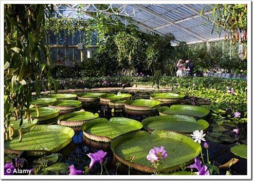 Forolondres Web Y Foro Especializado En Londres Para Turistas Y Espanoles En Londres Londres Huerto Urbano Jardines