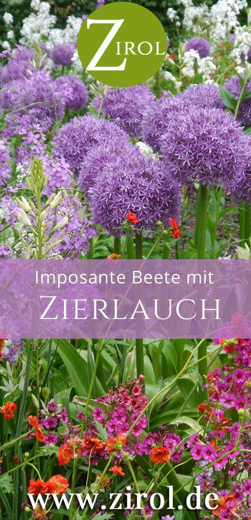 Zierlauch – der Star in imposanten Frühlingsbeeten – Zirol – die schönen Seiten des Gartens