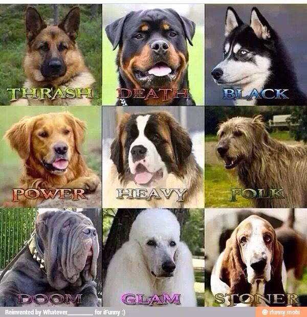 Heavy metal dog names