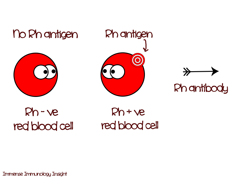 What Are Blood Group Antigens All About?