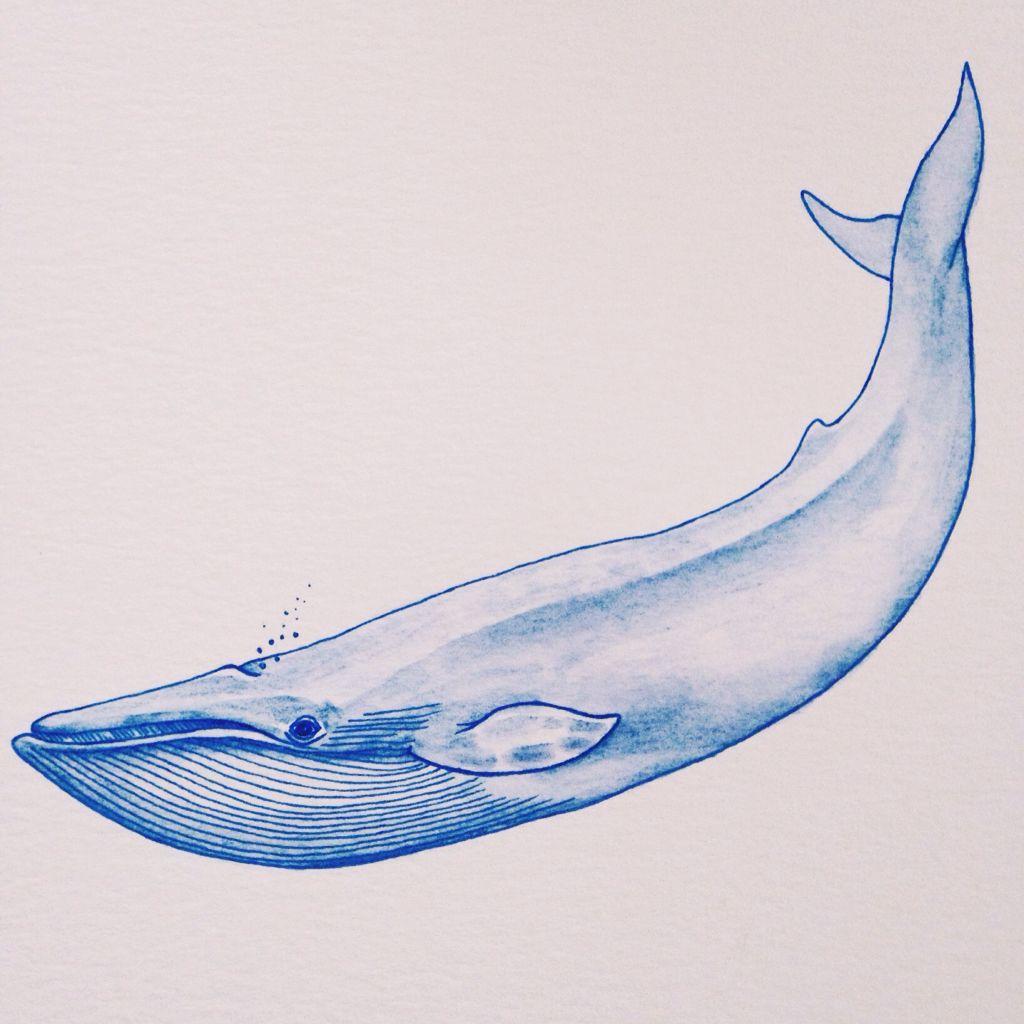 синий кит рисунок карандашом поэтапно