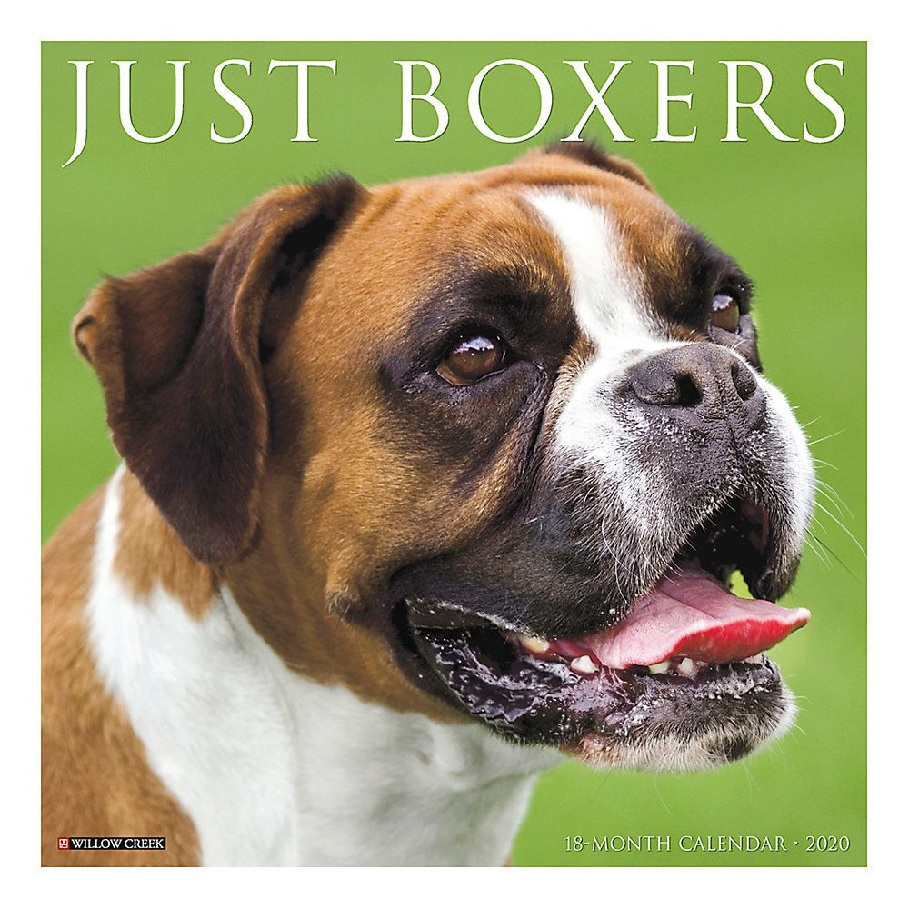 Willow Creek Press Animals Monthly Wall Calendar 12 X 12 Boxers January To December 2020 Willow Creek Dog Calendar Boxer