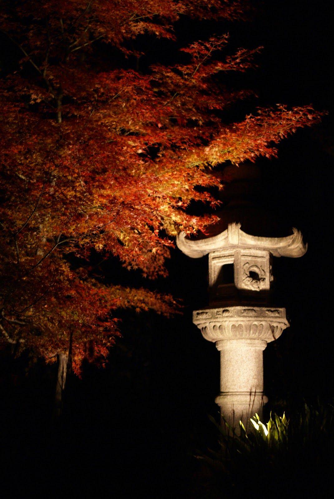 Enjoying Fall Color in Tokyo...At Night!