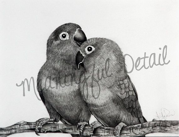 Love birds original pencil drawing by meaningfuldetail on etsy 70 00