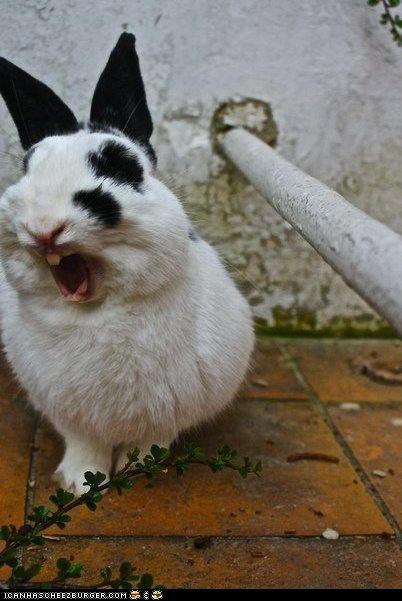 bunny yawn lol soo cute
