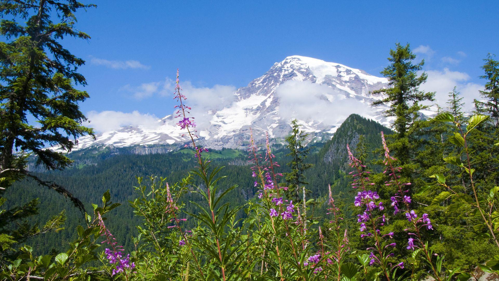 Wallpaper National parks, Rainier national park, Mount