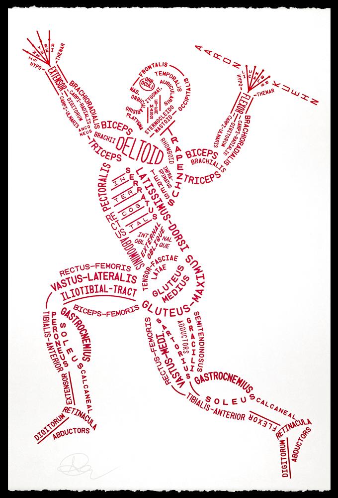 Los Receptores Musculares; Huso muscular y Órgano tendinoso de Golgi ...