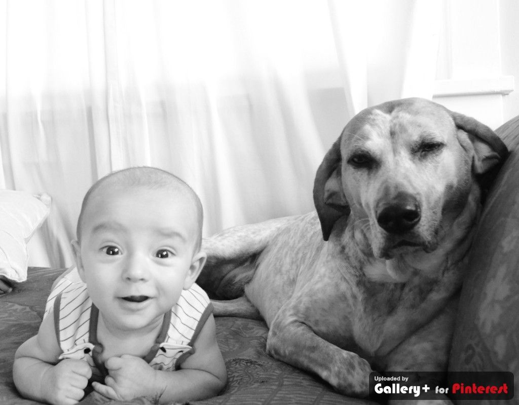 a boy and his dog #babyanddog pictures