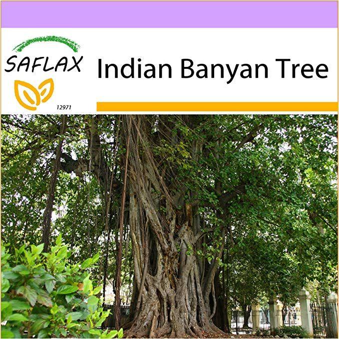 Banyan Tree Apartments: Amazon.com : SAFLAX