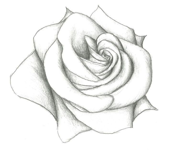 very cute easy awesome rose to sketch draw paint