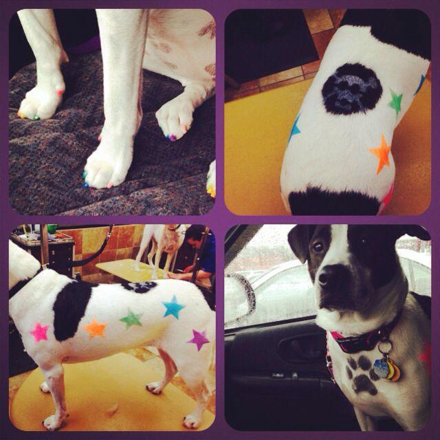 Petsmart Petexpressions Nailpolish Stencils Dogtattoos Dog Tattoos Animals Pets