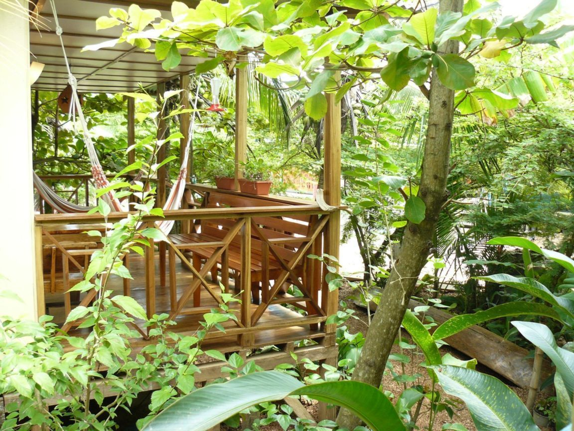 """Our Michigan """"Tropical"""" Garden, Southern Magnolia Tree. . 