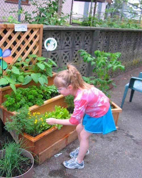 Start Apartment Vegetable Gardening | Happy House and Garden ...