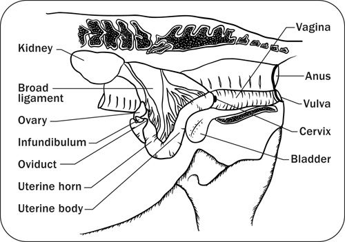 A. Provides information on the anatomy and physiology of a