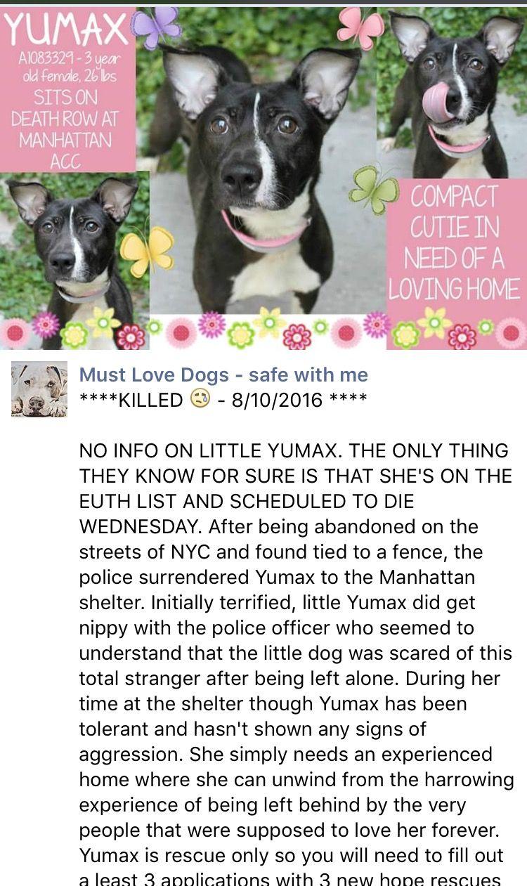MURDERED 8 10 16 Manhattan Center YUMAX – A DOH HOLD 07