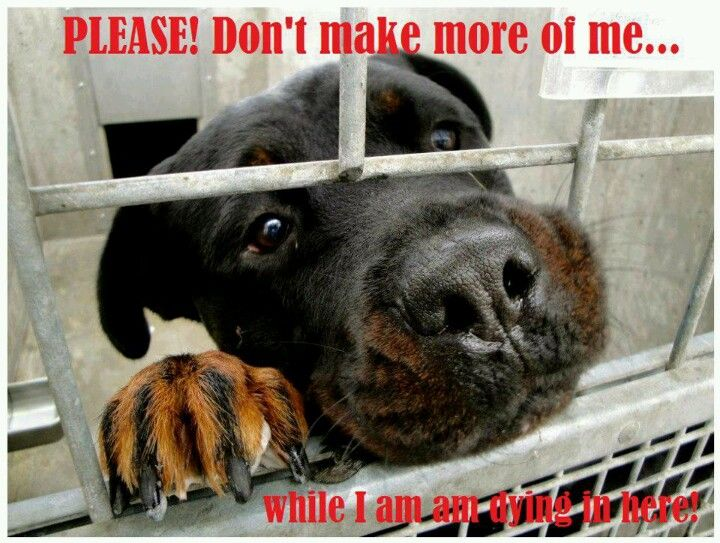 Don't buy from stores that sell dogs! Most pet stores sell