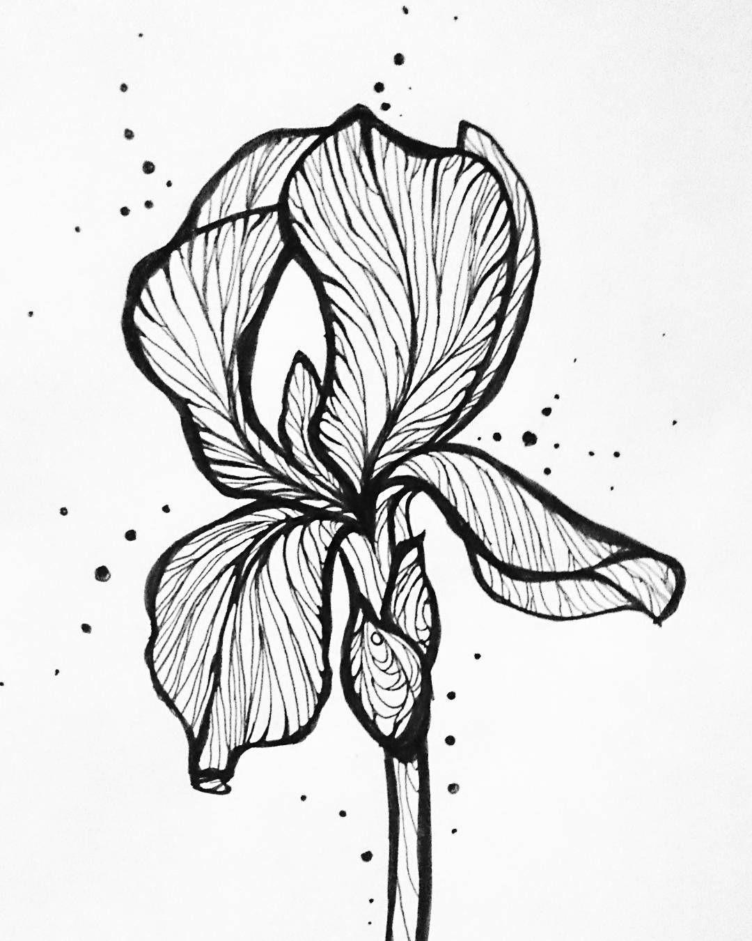 Картинки графика цветы, февраля фото
