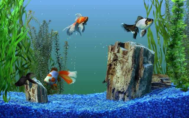 Live Aquarium Wallpapers For Windows 8 1 Wallpapersafari Aquarium Live Wallpaper Aquarium Screensaver Aquarium Fish