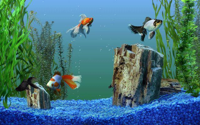 Free Aquarium Screensaver Download Aquarium Live Wallpaper Aquarium Screensaver Free Animated Wallpaper